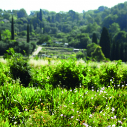Grasse In the wake of the perfumers…